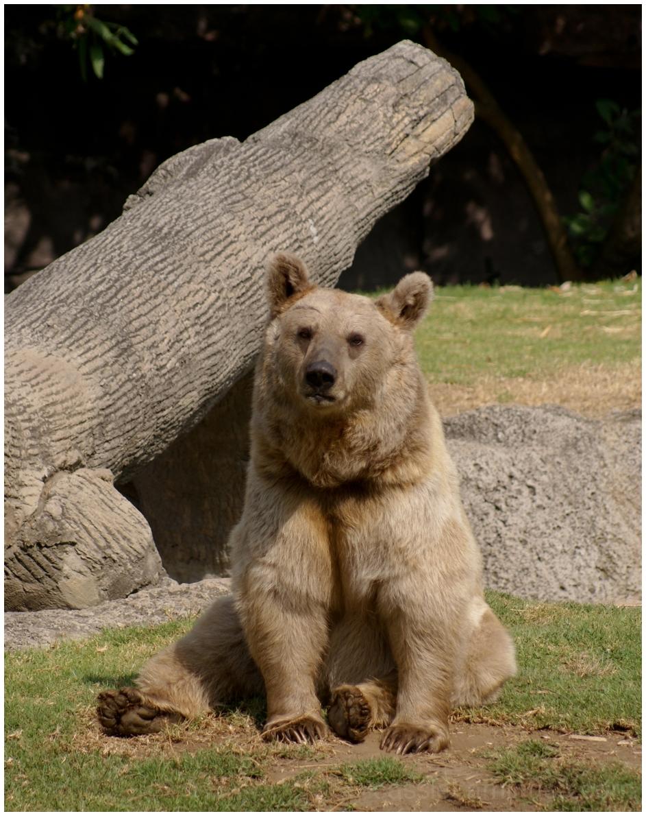 Zoológico Chapultepec