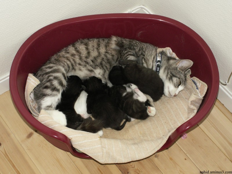 Cat next pussy