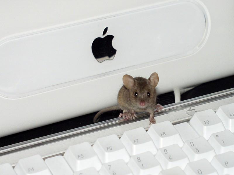 Souris sur un clavier Apple