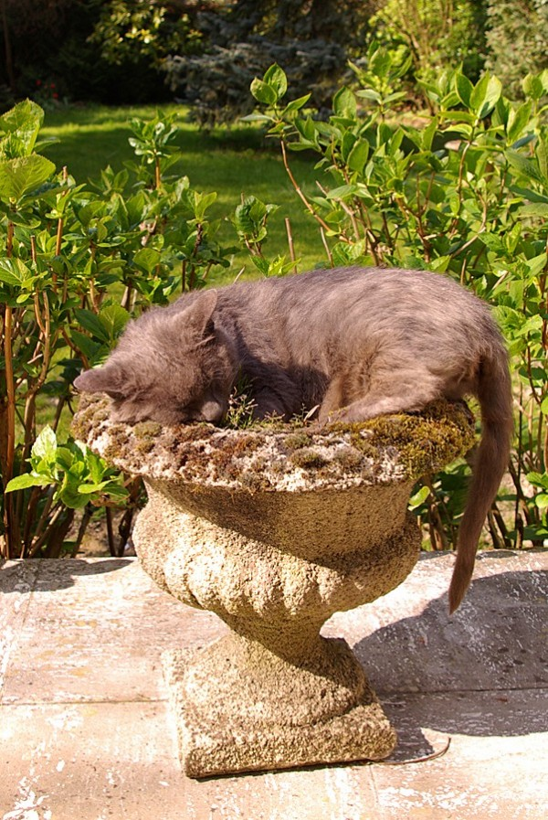 Wagner fait sa sieste dans un pot de fleurs