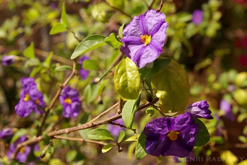 Année exceptionnelle, fleurs exceptionnelles