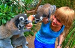 Maki Catta au zoo de St-Jean-Cap-Ferrat (HDR)