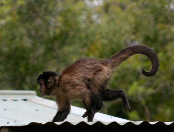 Lively monkey!