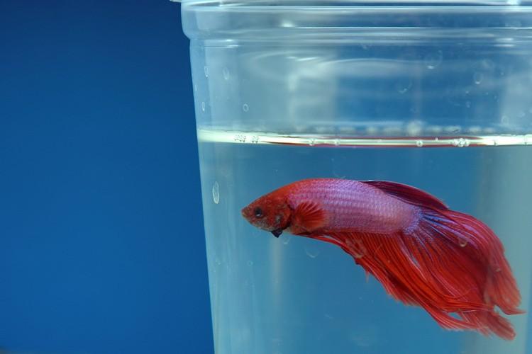 fishy-fish