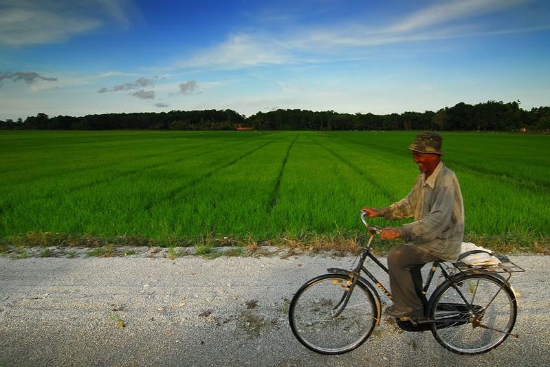 Padi Farmer