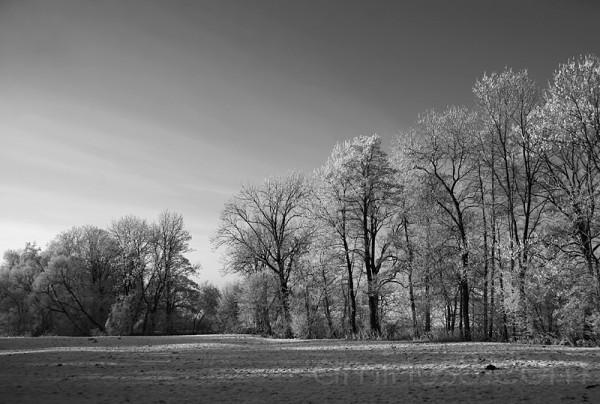 trees / frankenburg