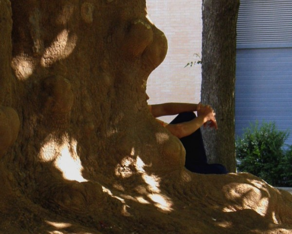 In The Shade of A Tree