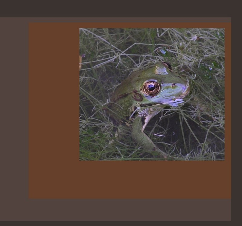 Young Frog