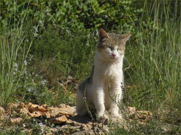 Cat on The Sunny Spot