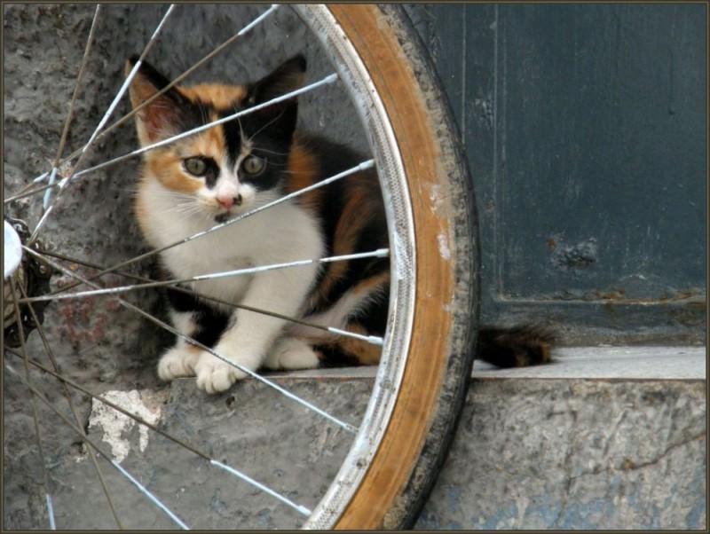 Kitten and A Wheel