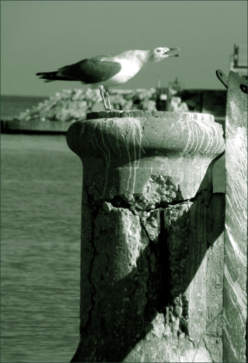 Seagull on The Bay Post