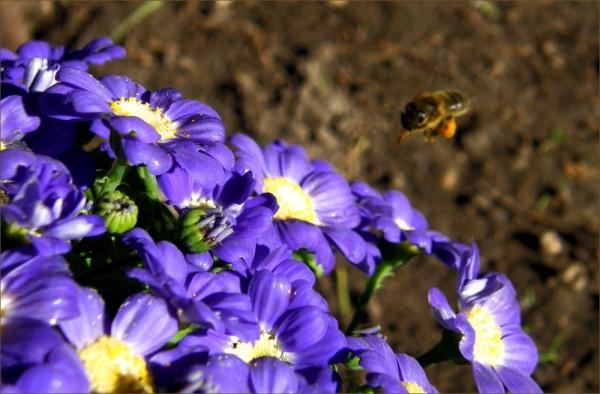 Humming Bee