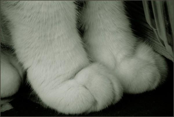 Cat´s Paws