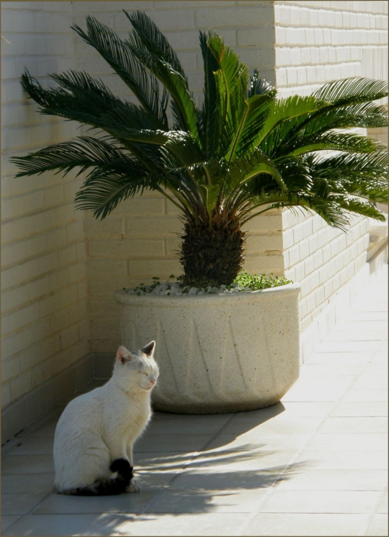 Cat in The Shade