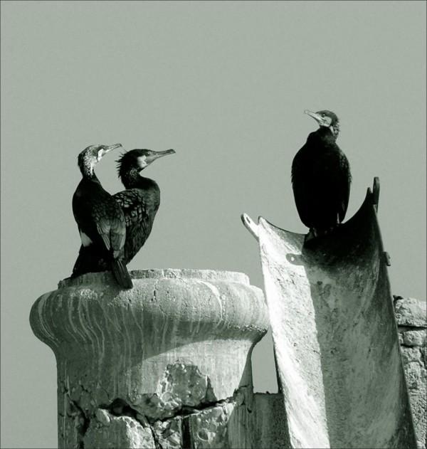 Birds in B&W