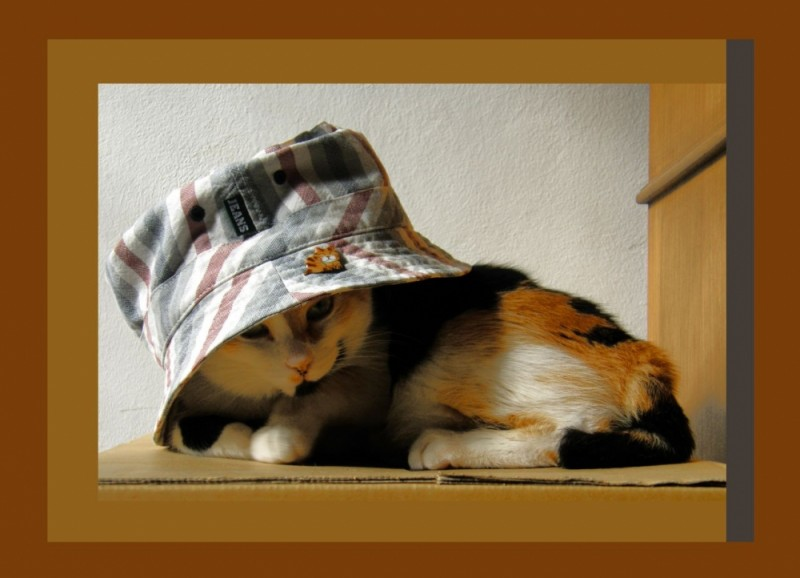 Cat in A Big Hat