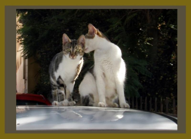 Mother&Kitten