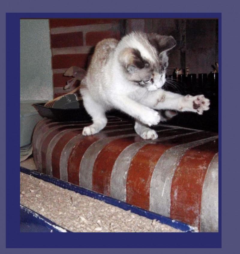 Kitten - Play Time