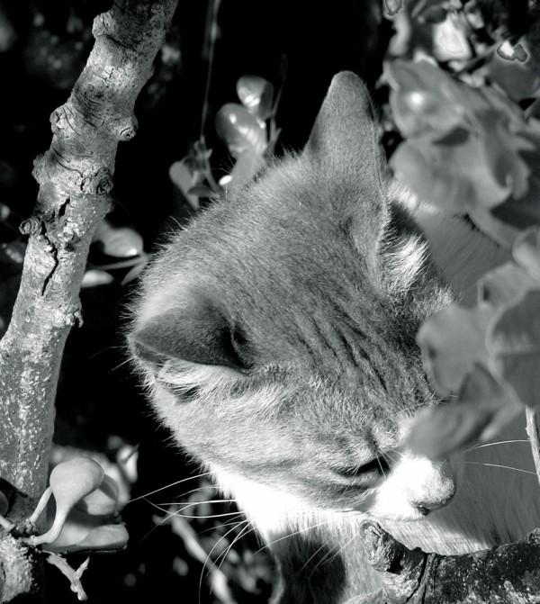 Kitten in The Wood