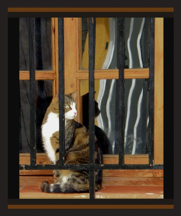 Cat at The Window Ⅱ