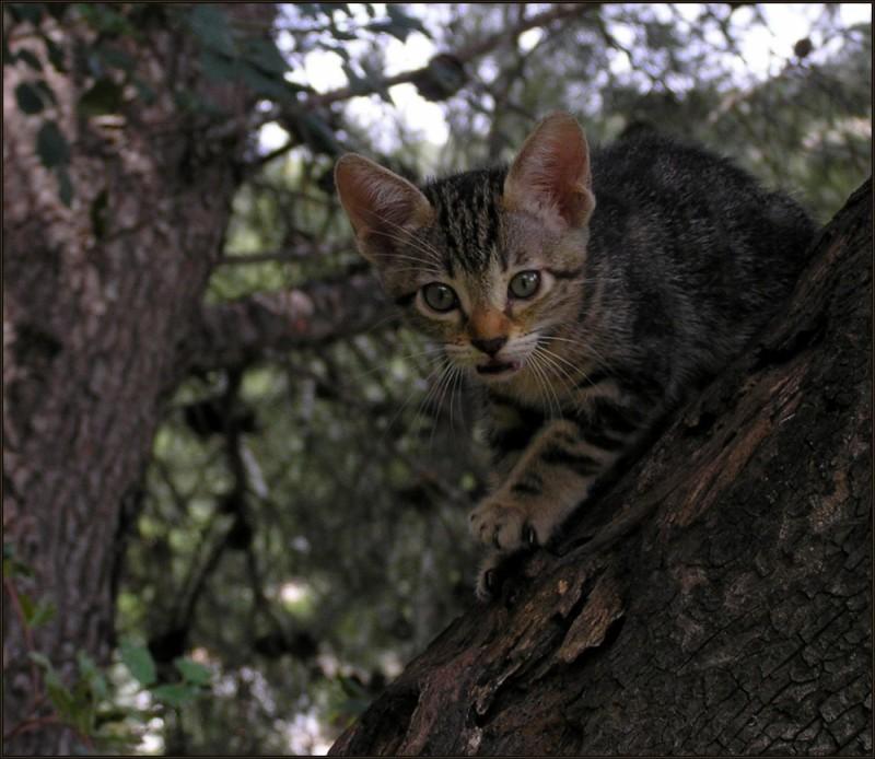 Kitten on The Tree