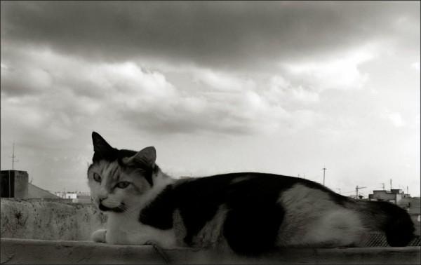 Cat & Rain Clouds
