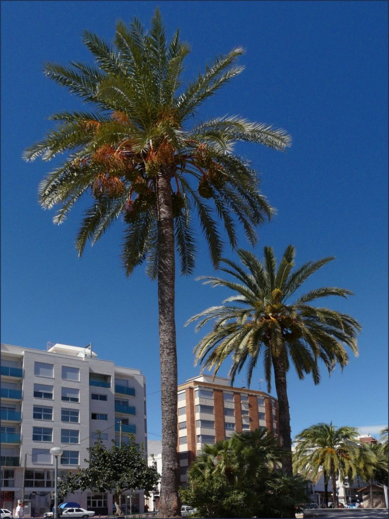 Palm Trees in The Town Square