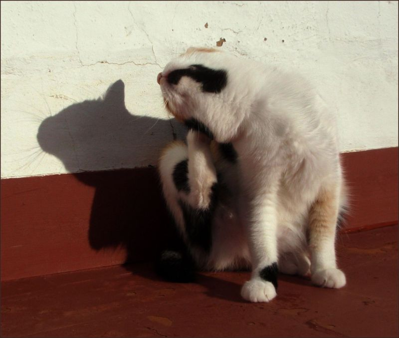 Sun Bathing Cat