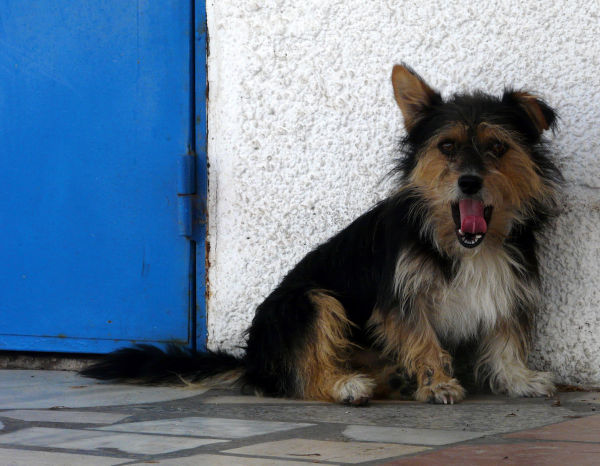 Dog by The Blue Door