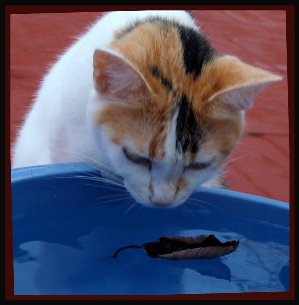 Cat and Dead Leaf
