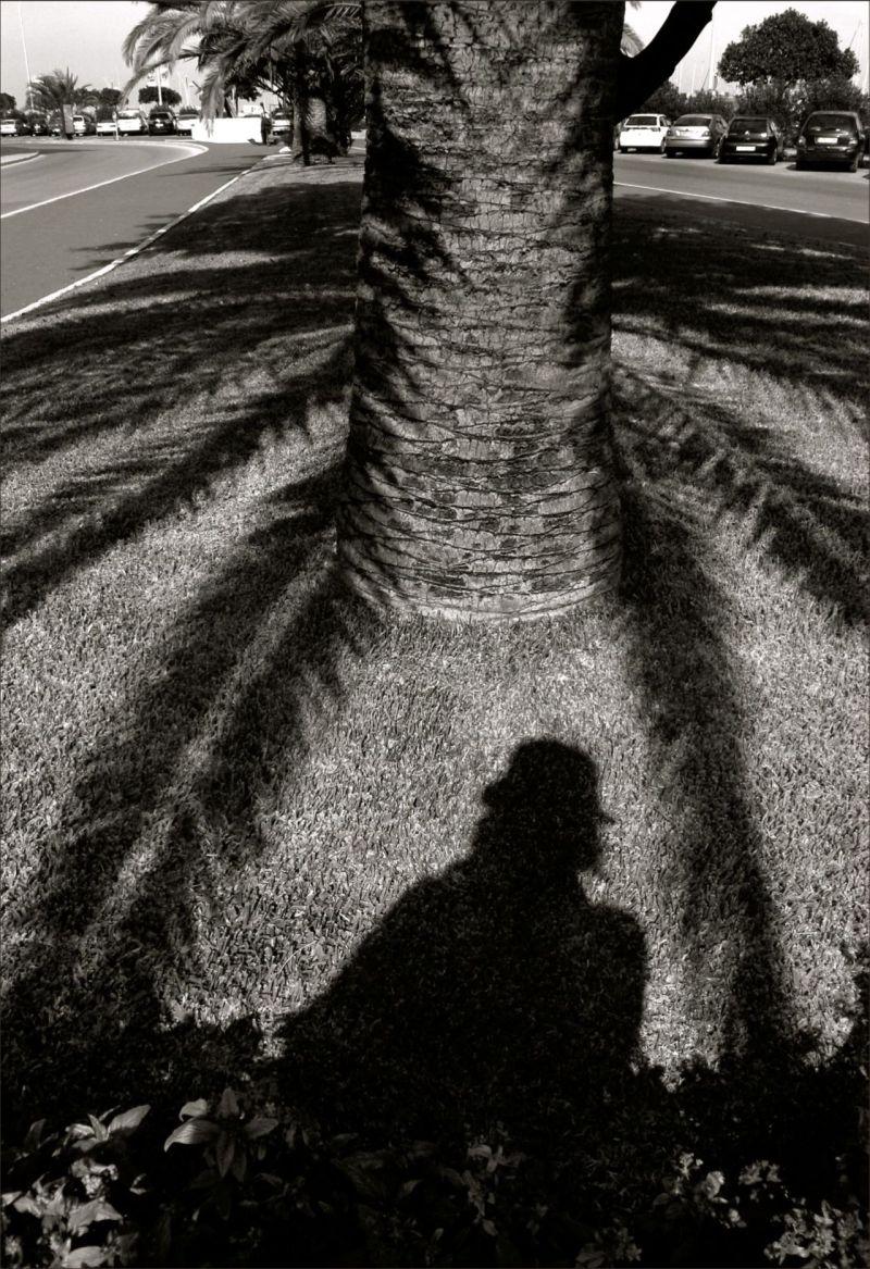 Palm tree and I