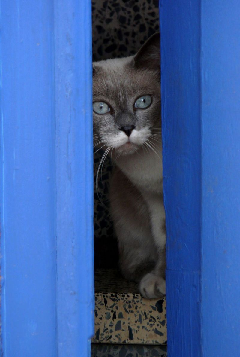 Cat Behind The Blue Door
