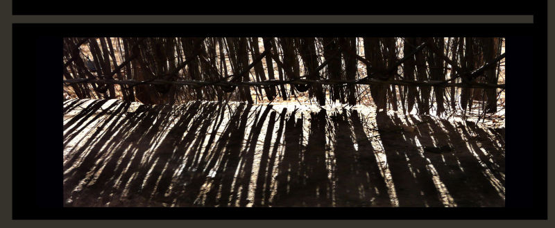 Shadow of The Bamboo Fence