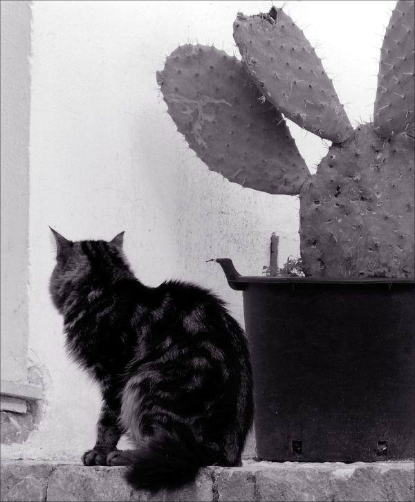 Cat & The Cactus