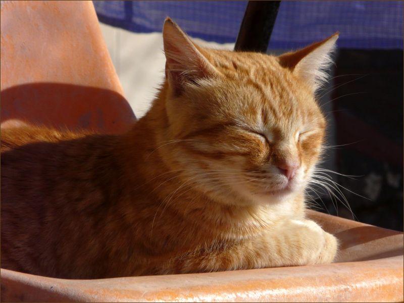 Dozing in A Sunny Spot