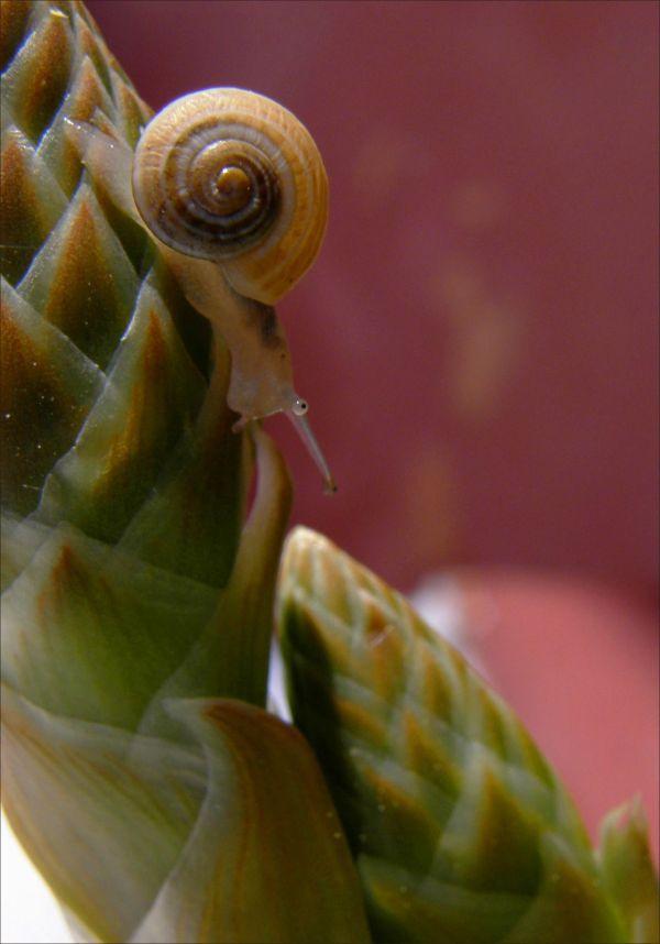 Baby Snail at The Aloe Bud