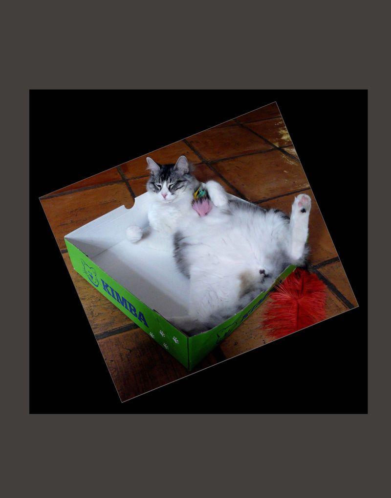 Tor in his favorite box
