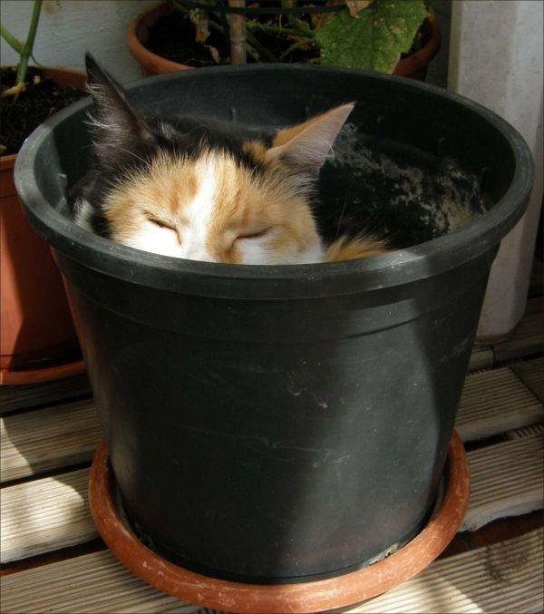 Jodi in the Plant Por