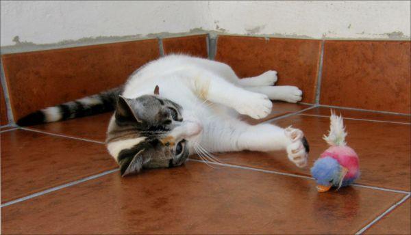 Playful Coco