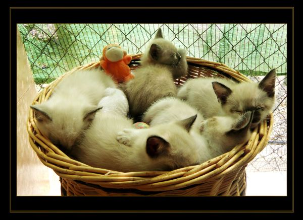 5 kittens sleeping in the basket
