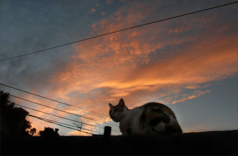 Cat and Evening Glow