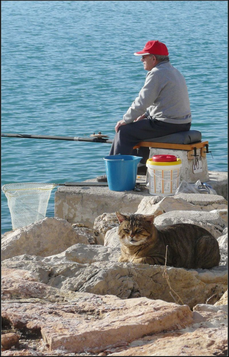Cat and Angler