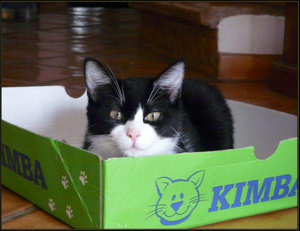 Felix in His Favorite Box
