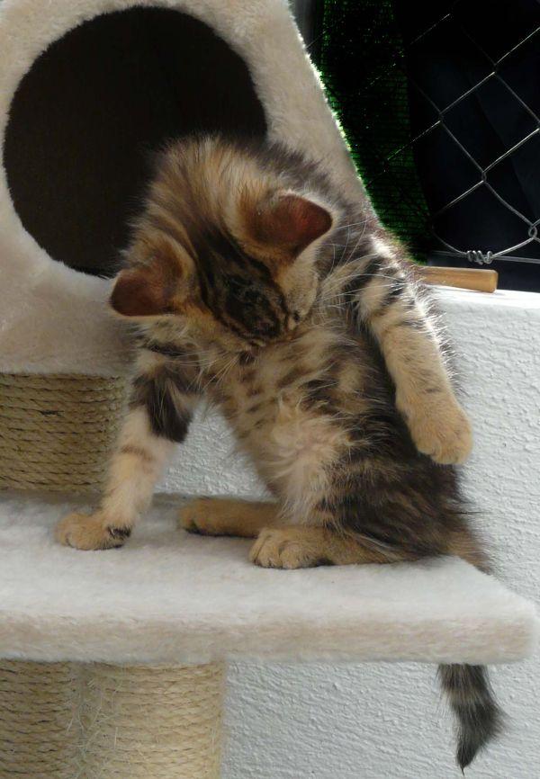 Self-Cleaning Kitten