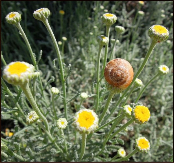 Field Flowers & Snail