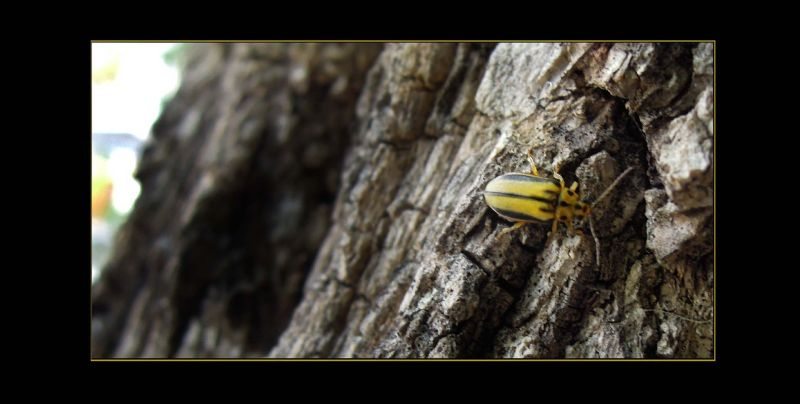 Tiny Bug at The Tree Bark