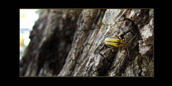 Tiny Bug at The Tree Bark