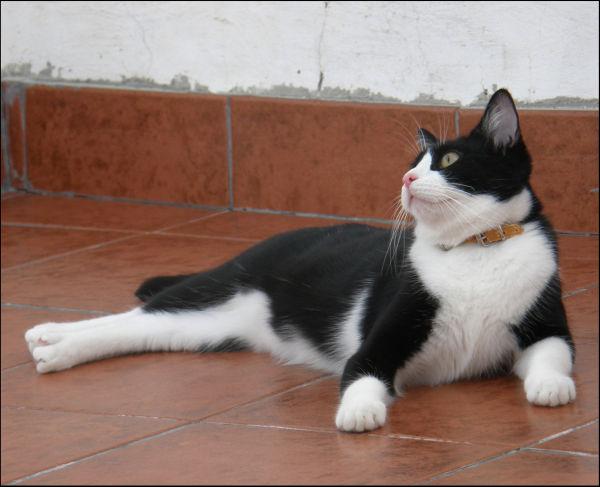 Birthday Boy Cat Felix