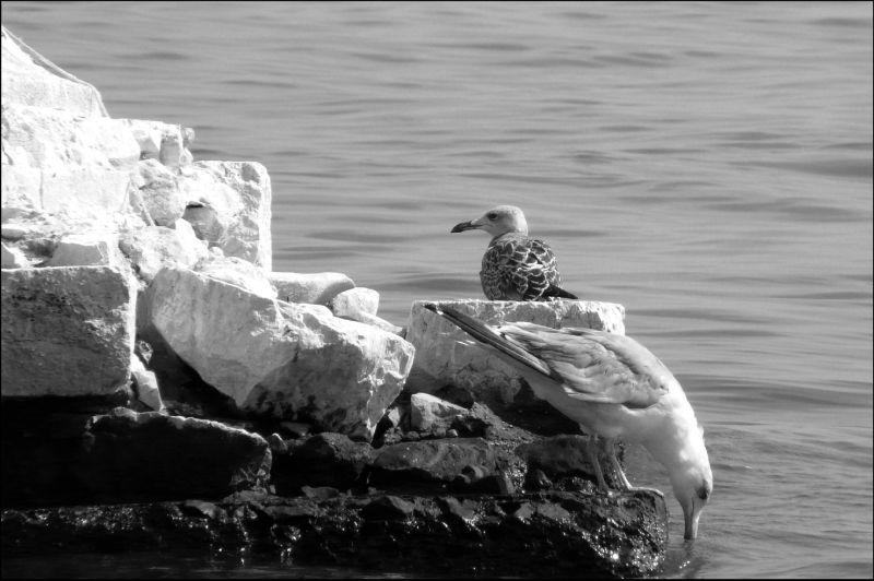 Seagulls at The Denia Harbor