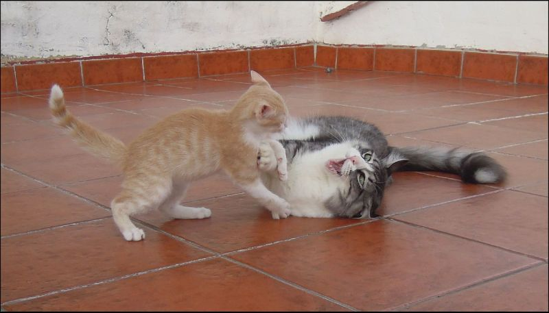 Fighting Tor and Kitten Dennis
